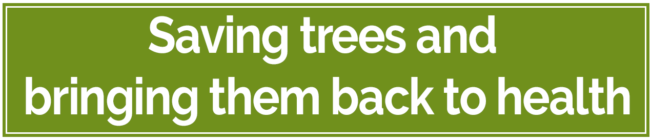 arborist Bucks County